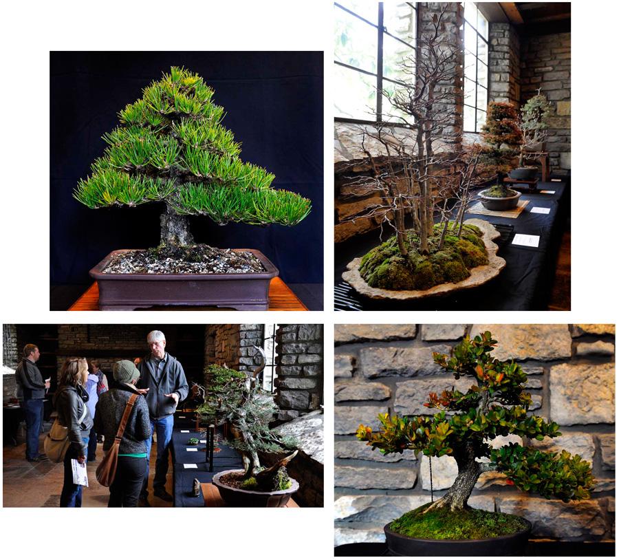 2012 Winter Bonsai Display