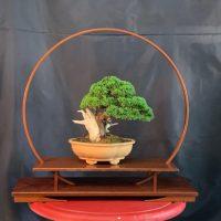 Knoxville Bonsai Society